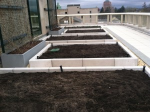 The rooftop Garden Beds on the first day! (early April)