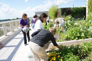 working together on the roof this summer!